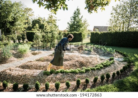 Man working on a synergistic vegetable garden - stock photo
