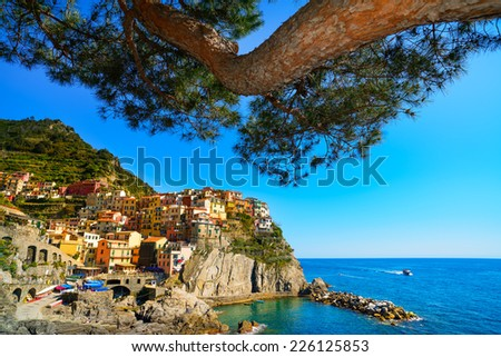 Manarola village and pine tree on cliff rocks and sea at sunset., Seascape in Five lands, Cinque Terre National Park, Liguria Italy Europe. Square format. - stock photo