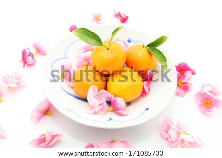 Mandarins with Plum flowers in a bowl isolated on white - stock photo