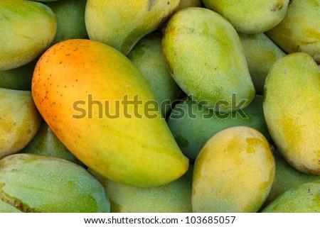 Mango fruit , thailand - stock photo