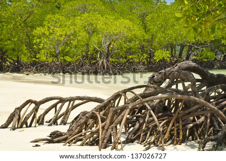 Mangrove and roots on sand, Surin Islands, Pang-nga Province, Thailand - stock photo