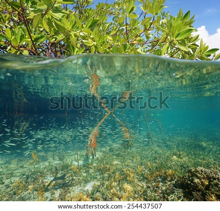 Mangrove ecosystem over and under the sea with foliage above water surface and corals with juvenile fish below, Caribbean - stock photo