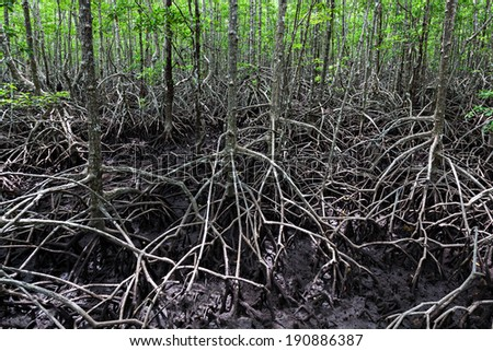 Mangrove forest looks like very terrible place - stock photo