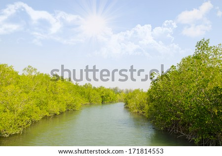 Mangrove forest with blue sky - stock photo
