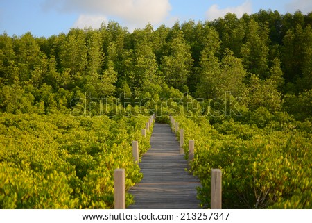Mangrove forest with wood Walk way - stock photo
