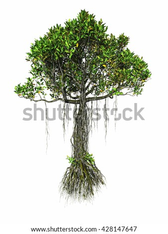 Mangrove tree in white background isolated - stock photo