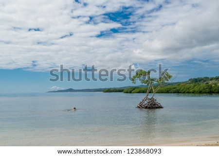 Mangrove tree off beach in Roatan Island , Honduras - stock photo