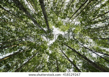 mangrove trees forest - stock photo