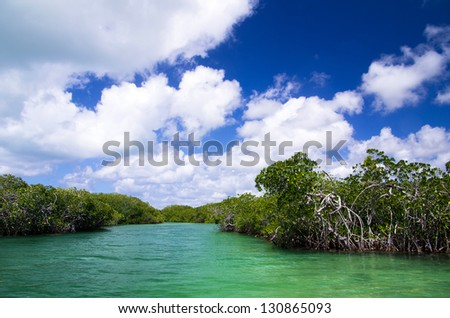 mangrove trees in caribbean sea - stock photo