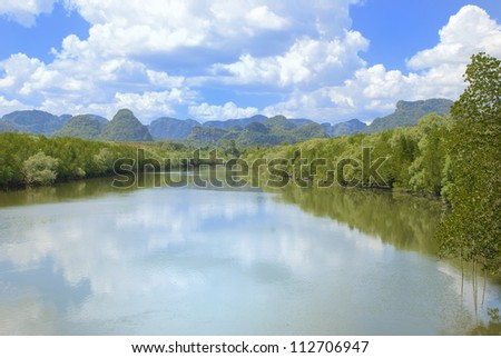 mangroves along the river - stock photo