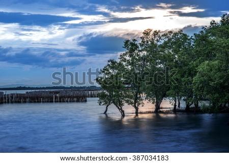 mangroves forest in sunset - stock photo