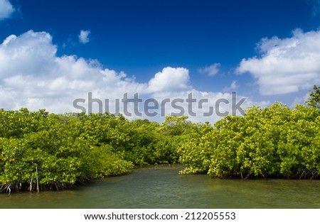 Mangroves growing in shallow lagoon, bay of Grand Cayman, Cayman Islands. - stock photo