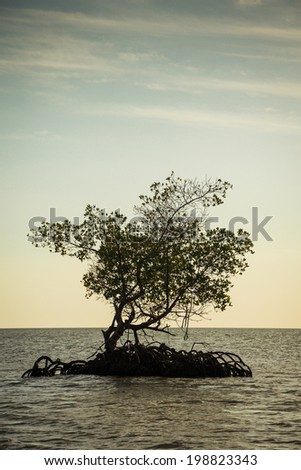 Mangroves in Florida Everglades. - stock photo