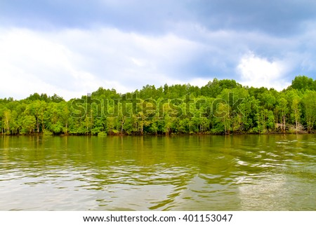 Mangroves in Green water at low tide - stock photo