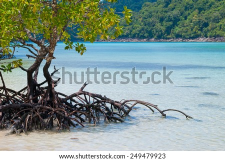 Mangroves in the sea of Thailand - stock photo