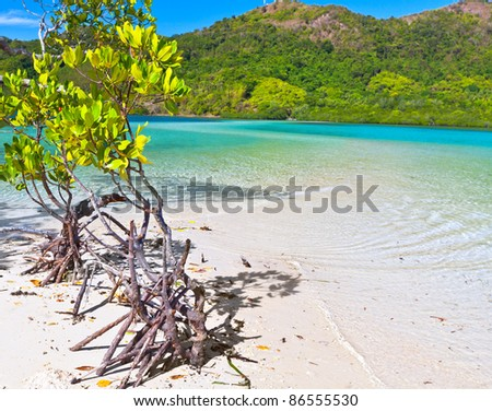 Mangroves tree on the tropical island Snake - stock photo