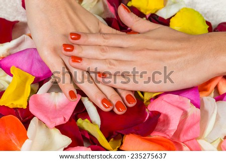 Manicure - Beautiful manicured woman's hands with red nail polish on rose petals.Beautiful hands with a nice manicure. Gel nails are covered with red polish. Spa treatment for hands. - stock photo