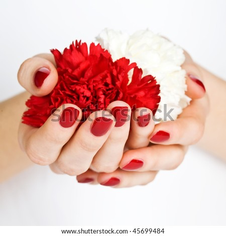 Manicured hands holding red and white flowers close-up - stock photo