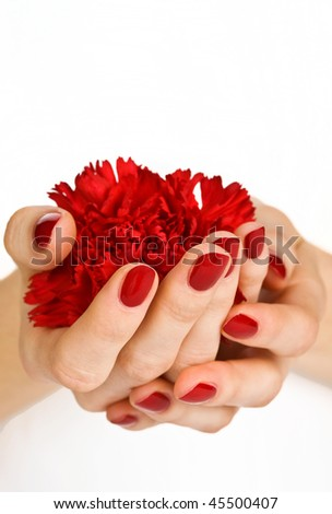 Manicured hands holding red carnation close-up - stock photo