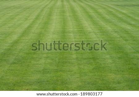 manicured lawn on a football field / football field - stock photo