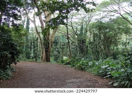 Manoa Falls Trail - stock photo
