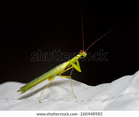 Mantis ask for silence - stock photo
