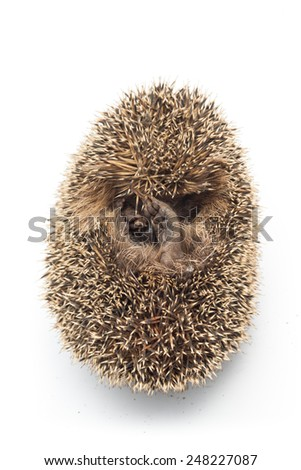 mantle with prickles of a hedgehog - stock photo