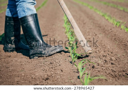 Manual labor in agriculture - stock photo