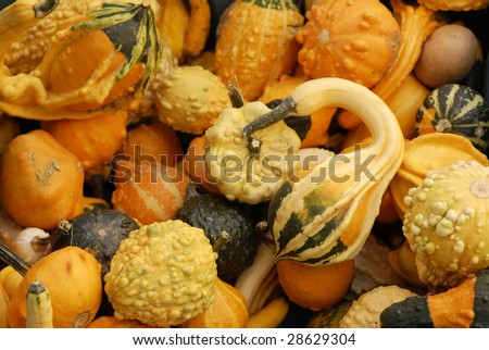 Many autumn gourds for sale at an outdoor farmers market. - stock photo