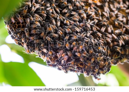 Many bees to a hive of bees - stock photo