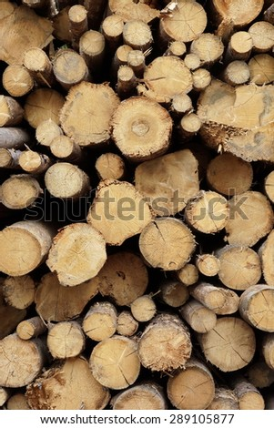 Many Big Old Pine Wood logs In Large Woodpile Background Texture - stock photo