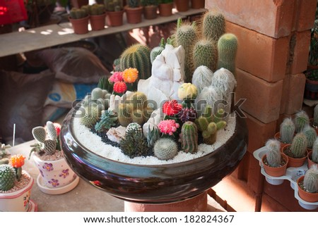 Many cactus species in the same pot - stock photo