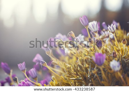 many colorful bright lilac pink flowers and yellow grass on natural background. Outdoor natural vintage macro fresh morning photo - stock photo