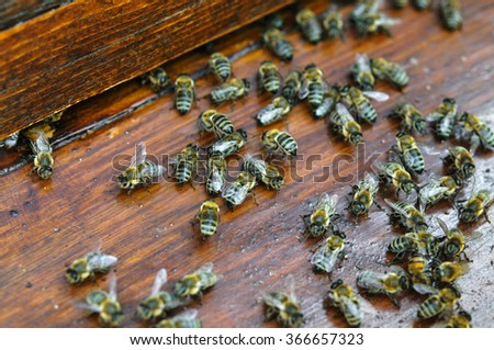 MAny colorful moving bees on wooden board of beehive - stock photo