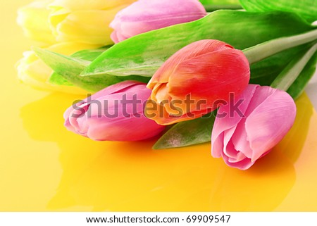 Many colorful tulips on the color  background - stock photo