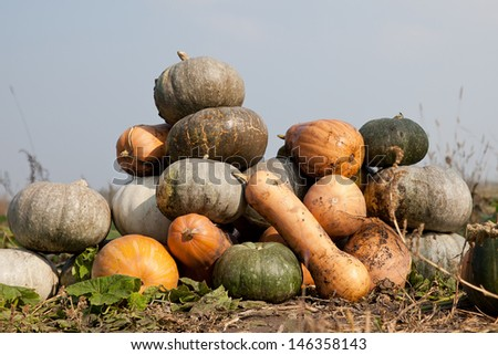 Many different kinds and colors pumpkins: yellow, grey, green and orange laying on the ground in the field - stock photo