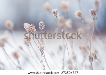 many dry meadow flowers in winter field. Nature background - stock photo