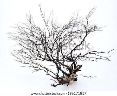 Many dry twigs In rocks 0013 - stock photo