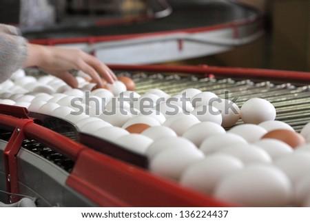 many eggs on the farm - stock photo