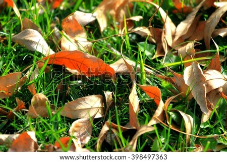 Many fall leafs lying on green grass. - stock photo