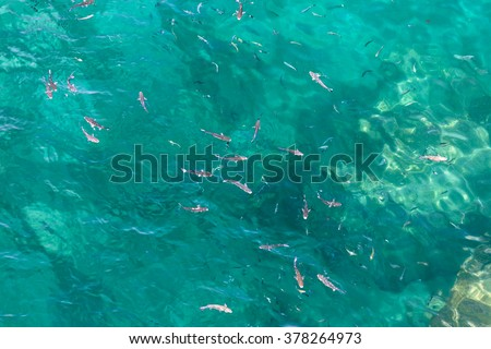 Many fish on the beautiful water surface. Top view of the Alboran Sea in the Strait of Gibraltar. - stock photo