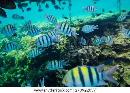 Many fishes - stock photo