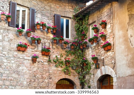 Many flower pots with blooming cyclamen on the wall of an old stone house in Assisi, Umbria - stock photo