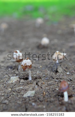 Many fungi are mushrooms in the forest - stock photo