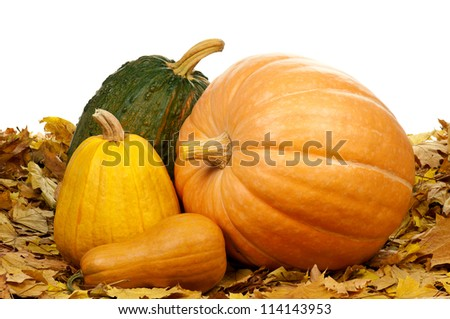 Many halloween pumpkins of different shapes and sizes surrounded by leaves on white background - stock photo