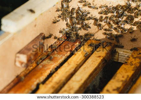 Many hardworking bees on beehive with wooden frames of honeycomb inside, on sunny day close up - stock photo