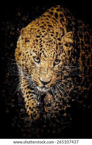 Many photographs of leopard, forms an image of the leopard - stock photo