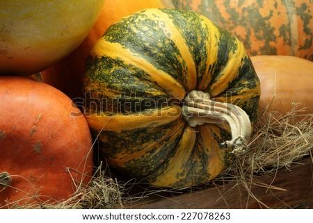 Many pumpkins in a barn still life - stock photo