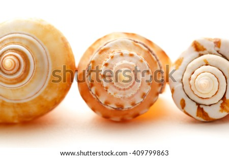 Many seashells on white background in closeup - stock photo