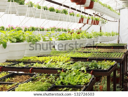 Many small plants growing in the greenhouse - stock photo